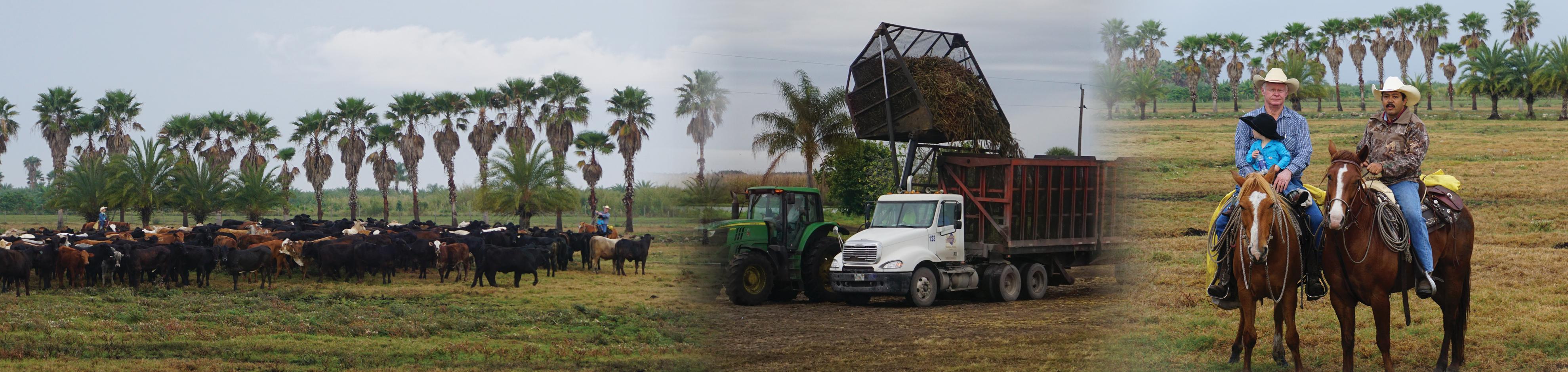 Center for Agribusiness