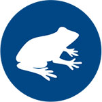 Icon for frog presentation